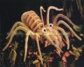 Ghép hình nhện TARANTULA